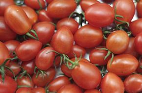 Cà chua ngọt