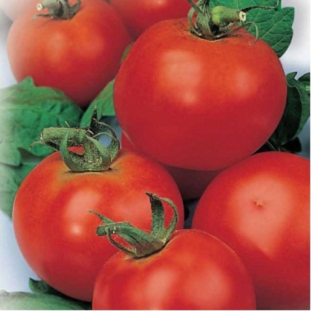 Cà chua Organic