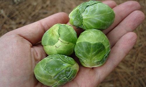 Bắp cải tí hon (Brussel Sprouts)