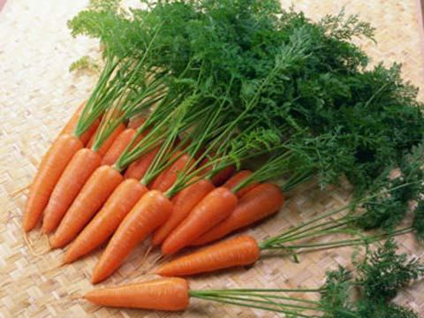 Cà rốt có tác dụng bổ dưỡng và chữa bệnh