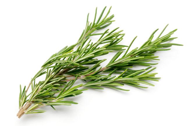 Lợi ích sức khỏe của hương thảo
