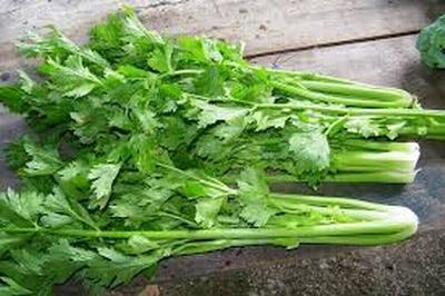 Những công dụng chữa bệnh quý báu của cần tây