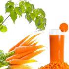 Nước cà rốt vừa bổ dưỡng vừa chữa bệnh
